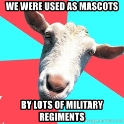 Oblivious Activist Goat - We were used as mascots by lots of military regiments