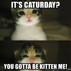 Adorable Kitten - It's Caturday? You gotta be kitten me!