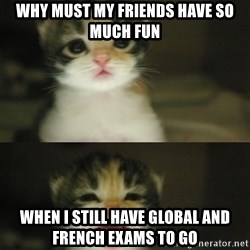Adorable Kitten - why must my friends have so much fun when i still have global and french exams to go
