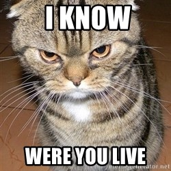 angry cat 2 -  i know were you live