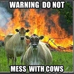 Evil Cows - warning  do not  mess  with cows