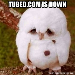 Depressed Owl - tubed.com is down