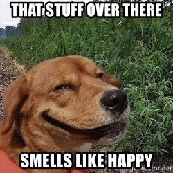 dogweedfarm - that stuff over there smells like happy