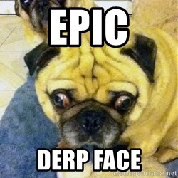 Perplexed Pug - epic derp face