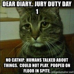 Depressed cat 2 - dear diary.. jury duty day 1 no catnip.  humans talked about things.  could not play.  pooped on floor in spite.