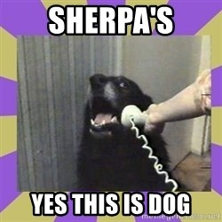 Yes, this is dog! - sherpa's yes this is dog