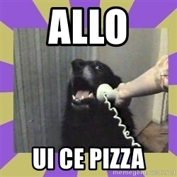 Yes, this is dog! - ALLO UI CE PIZZA