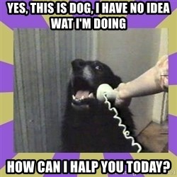 Yes, this is dog! - Yes, this is dog, I HAVE NO IDEA WAT I'M DOING how can i halp you today?
