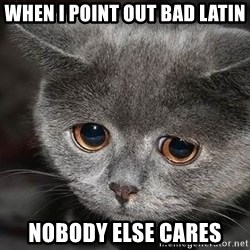 sad cat - when I point out bad latin nobody else cares