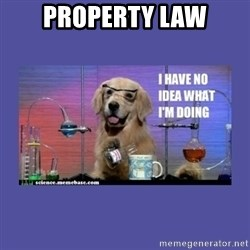 I don't know what i'm doing! dog - property law