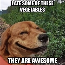 dogweedfarm - I ate SOME OF THESE VEGETABLES they are awesome
