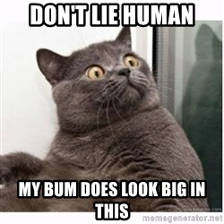 Conspiracy cat - don't lie human my bum does look big in this