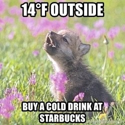 Baby Insanity Wolf - 14°F OUTSIDE BUY A COLD DRINK AT STARBUCKS