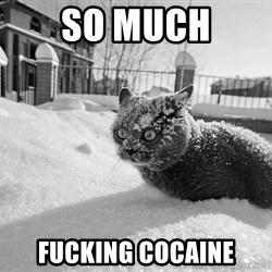 Sudden Clarity Cocaine Cat - so much fucking cocaine