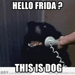 Hello This is Dog - Hello frida ?  This is Dog