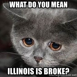 sad cat - what do you mean illinois is broke?