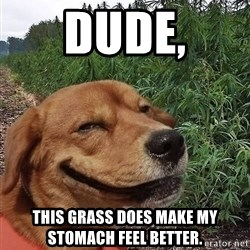 dogweedfarm - Dude, This grass does make my stomach feel better.