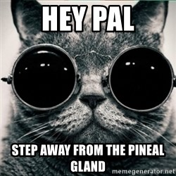 Morpheus Cat - hey pal step away from the pineal gland