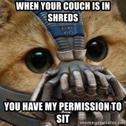 bane cat - When your couch is in shreds You have my permission to sit