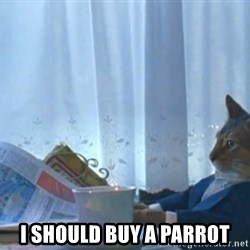 newspaper cat realization -  I should buy a parrot