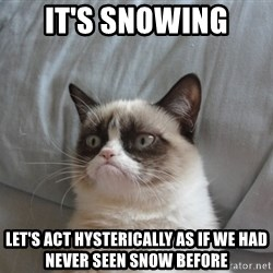 Grumpy cat good - IT's snowing let's act hysterically as if we had never seen snow before