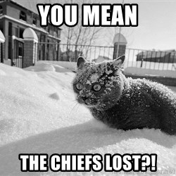 Sudden Clarity Cocaine Cat - you mean the chiefs lost?!