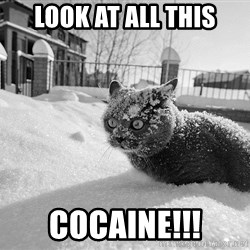 Sudden Clarity Cocaine Cat - look at all this cocaine!!!