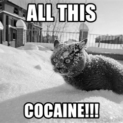 Sudden Clarity Cocaine Cat - all this cocaine!!!