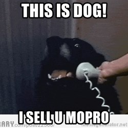 Hello This is Dog - This is dog! I sell u mopro