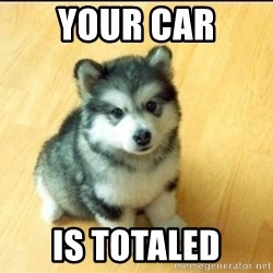 Baby Courage Wolf - your car is totaled