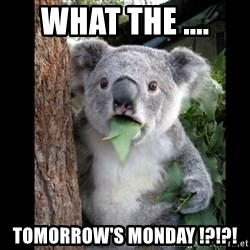 Koala can't believe it - WHat the .... tomorrow's monday !?!?!