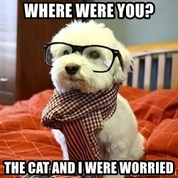 hipster dog - where were you? the cat and i were worried