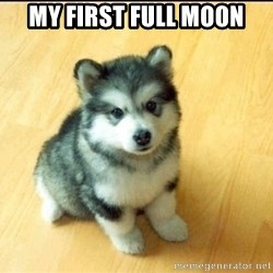 Baby Courage Wolf - My first full moon