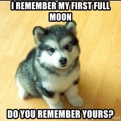 Baby Courage Wolf - I remember my first full moon do you remember yours?