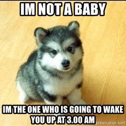 Baby Courage Wolf - IM NOT A BABY IM THE ONE WHO IS GOING TO WAKE YOU UP AT 3.00 AM