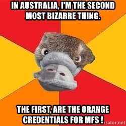 Psychology Student Platypus - In australia, i'm the second most bizarre thing. the first, are the orange credentials for mfs !