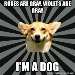 Color Blind Dog - Roses are Gray, Violets are Gray I'm a dog