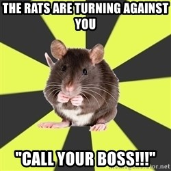"""Survivor Rat - THE RATS ARE TURNING AGAINST YOU """"CALL YOUR BOSS!!!"""""""