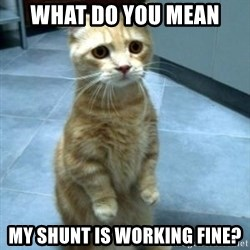 sadcat5 - what do you mean my shunt is working fine?