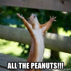 Praising Squirrel -  ALL THE PEANUTS!!!
