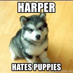 Baby Courage Wolf - harper hates puppies