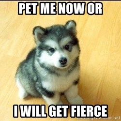 Baby Courage Wolf - pet me now or i will get fierce
