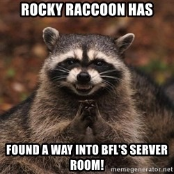 racoon - Rocky Raccoon has Found a way into BFL's Server room!