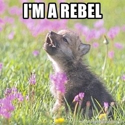 Baby Insanity Wolf - I'm a rebel