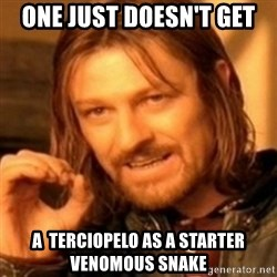 ODN - One Just doesn't get a  terciopelo as a starter venomous snake
