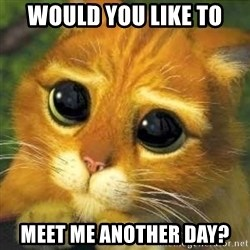 Shrek cat 2 - Would you like to MEET ME ANOTHER DAY?