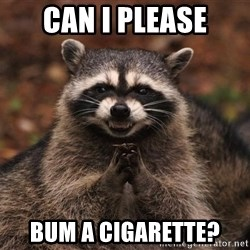 racoon - Can I please bum a cigarette?