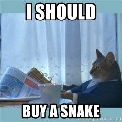 rich cat  - I should buy a snake