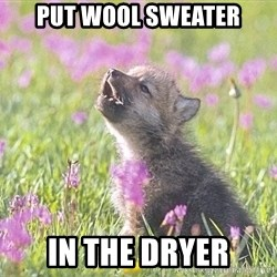 Baby Insanity Wolf - Put wool sweater In the dryer