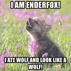 Baby Insanity Wolf - I am enderFox! I ate wolf and look like a wolf!